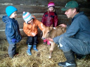Let's Talk About Antibiotics And Organic Animal Care